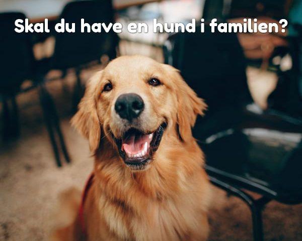 Skal du have en hund i familien?